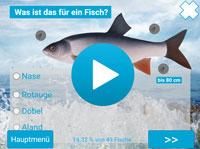 Extragroße Fischbilder